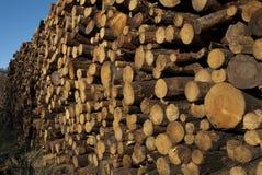 A madeira de pinho recolheu após o fogo, Guadalajara, Espanha fotografia de stock