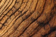 Madeira de Veinied Foto de Stock Royalty Free