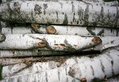 Madeira de vidoeiro Foto de Stock