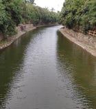 Madeira densa de enrolamento do rio fotos de stock royalty free