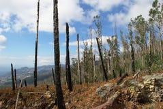 Madeira después de un fuego del arbusto fotos de archivo