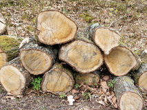 A madeira deve ser lenha fotografia de stock