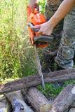 Madeira do corte da serra de cadeia na floresta Foto de Stock