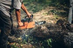 Madeira do fogo do corte do lenhador usando a serra de cadeia profissional Imagens de Stock Royalty Free