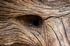 madeira do fundo imagem de stock royalty free