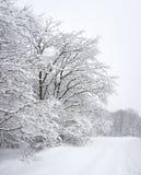 Madeira do inverno Imagens de Stock