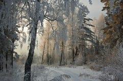 Madeira do inverno Fotos de Stock Royalty Free