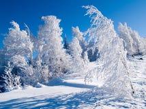 Madeira do inverno Fotografia de Stock