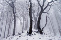 Madeira do inverno Foto de Stock Royalty Free