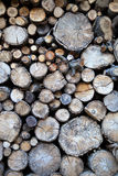 Madeira do outono Fotografia de Stock Royalty Free