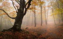 Madeira do outono Fotos de Stock Royalty Free