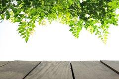 Madeira do terraço da perspectiva e licença verde para o fundo do uso Imagens de Stock