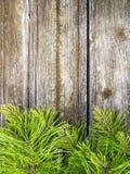 Madeira do vintage dos ramos de pinheiro Imagens de Stock Royalty Free