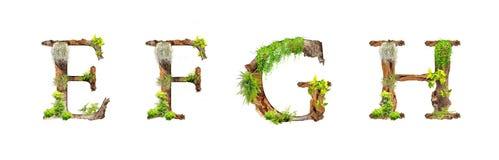 A madeira e as plantas do alfabeto texture E F G H isoladas no backgroud branco Fotos de Stock