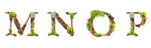 A madeira e as plantas do alfabeto texture M N O P isoladas no fundo branco Imagens de Stock Royalty Free