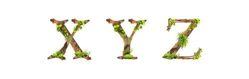 A madeira e as plantas do alfabeto texture X Y Z isoladas no fundo branco Imagens de Stock Royalty Free