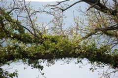 Madeira e hera Foto de Stock Royalty Free