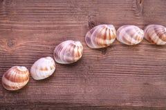 Madeira e mar Shell Imagens de Stock