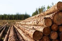 Madeira empilhada na floresta Imagens de Stock