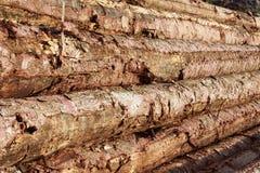 Madeira empilhada na floresta Foto de Stock Royalty Free