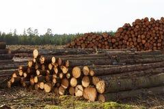 Madeira empilhada na floresta Fotografia de Stock