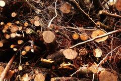 A madeira entra a floresta imagem de stock