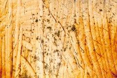 Madeira envelhecida Fotografia de Stock Royalty Free