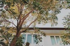 Madeira ereta Fotos de Stock Royalty Free