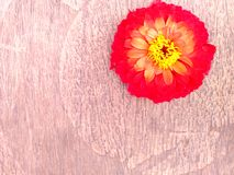 Madeira & flor Imagens de Stock Royalty Free