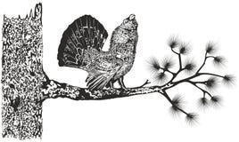 Madeira-galo silvestre em uma árvore ilustração royalty free