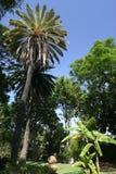 Madeira Gardens I. Private garden in Funchal, Madeira Royalty Free Stock Photos