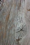 A madeira Gnarl a textura Fotos de Stock