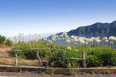 Madeira hermosa Fotos de archivo