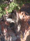 Madeira hirto de medo Foto de Stock Royalty Free