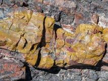 Madeira hirto de medo em Forest National Park hirto de medo Fotografia de Stock