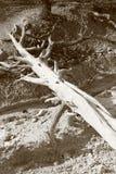 Madeira inoperante em preto e branco Fotos de Stock