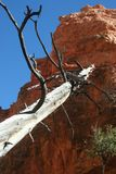 A madeira inoperante inclina-se contra a rocha vermelha Foto de Stock
