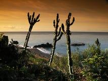Madeira island. Atlantic coast from madeira island Royalty Free Stock Photography