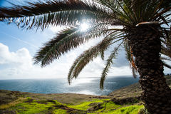 Madeira island. The tropical evergreen island of Madeira, Portugal Stock Photography