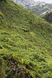 Madeira Island Royalty Free Stock Images