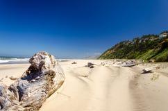 Madeira lançada à costa da praia Imagens de Stock