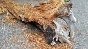 Madeira lançada à costa de desintegração em uma praia do Columbia Britânica fotos de stock