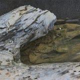 Madeira lançada à costa de duas cores Fotografia de Stock