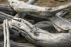 A madeira lançada à costa descorada dois entra o lago flagstaff, cano principal do noroeste imagem de stock royalty free