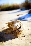 Madeira lançada à costa do deserto no inverno Fotografia de Stock Royalty Free