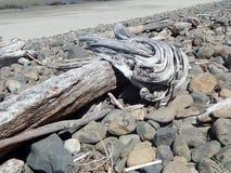 A madeira lançada à costa e as rochas cinzentas ao longo do Sandy Beach em Oregon costeiam fotos de stock