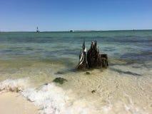 Madeira lançada à costa em Pensacola Fotos de Stock Royalty Free