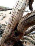A madeira lançada à costa habita fotos de stock