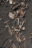 Madeira lançada à costa na areia Fotos de Stock Royalty Free