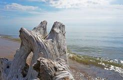 Madeira lançada à costa na costa do lago fotos de stock